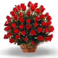 Splendid Roses, España