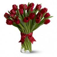 Tulipanes Premium, España