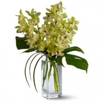 Cymbidium Orchids, España