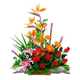 Caricias Exóticas  - Flores en  Lugo